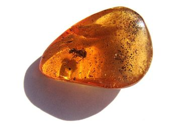 800px-An_ant_in_amber