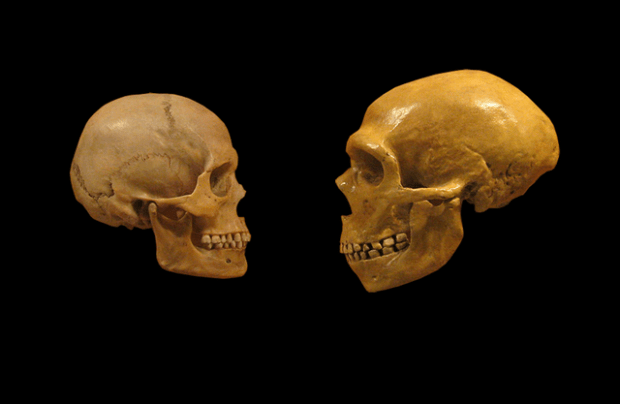 640px-Sapiens_neanderthal_comparison_en_blackbackground