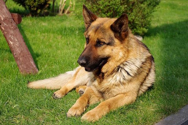 pastore-tedesco-odorologia-forense