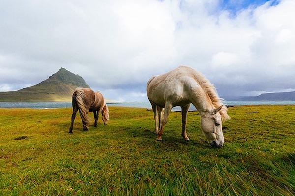 horses-1149185_640