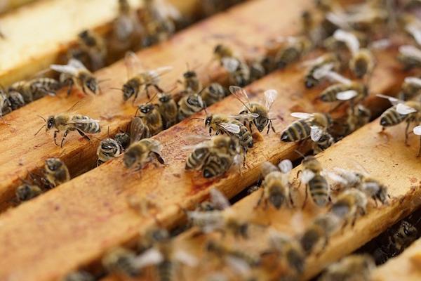 api-crioconservazione-estinzione