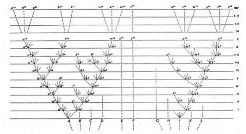 albero vita darwin evoluzione