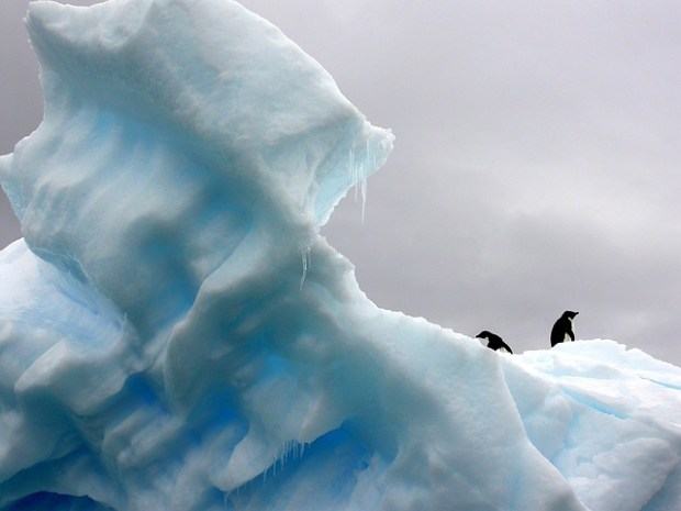 penguins-801876_640