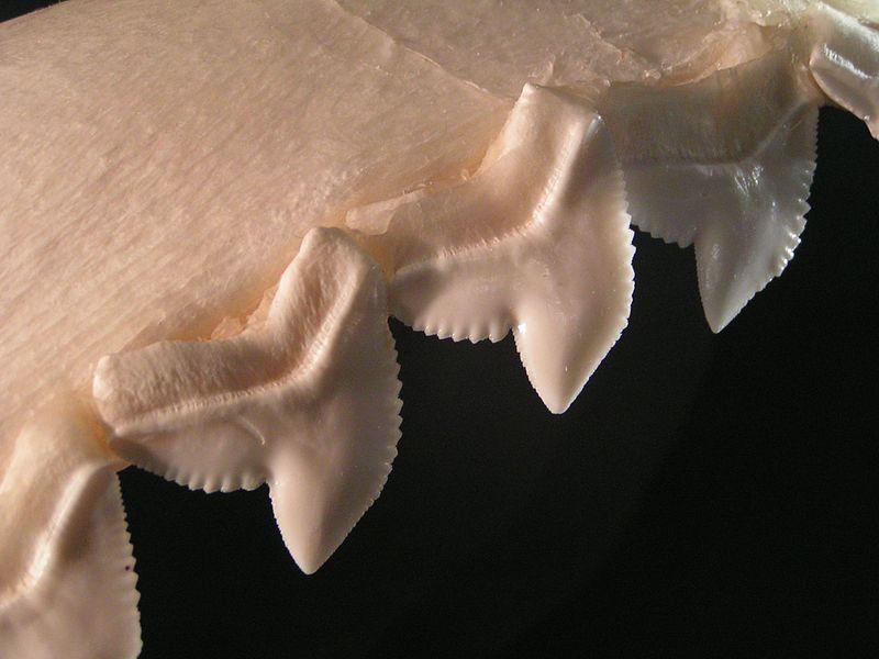 attacchi-di-squali