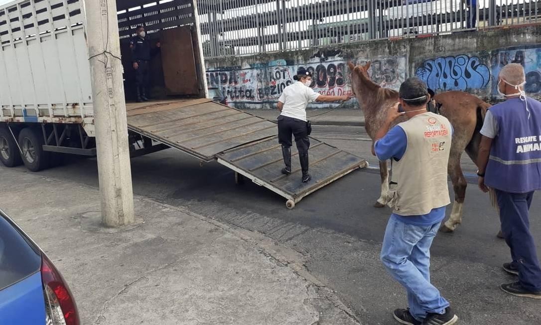 Égua é removida da estação de trem de Campo Grande após ficar quase cinco horas no local Foto: Divulgação/Supervia