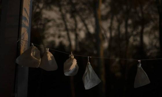 Depois de capturados e colocados em sacos de tecido, os morcegos são pesados, têm material coletado, são cadastrados e liberados Foto: Márcia Foletto / Agência O Globo