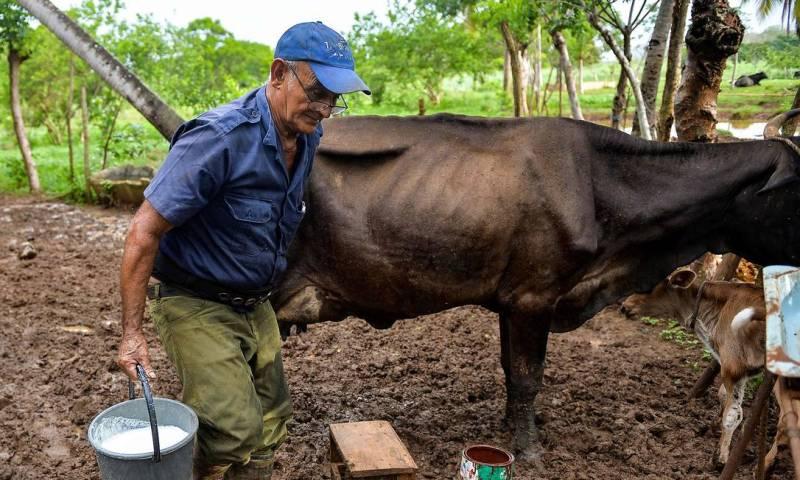 Produtor rural carrega balde de leite em sua fazenda em Batabano, província de Mayabeque, Cuba Foto: YAMIL LAGE / AFP