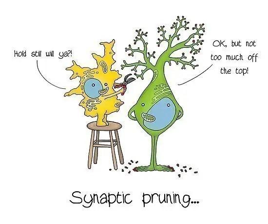renci blogları sinaptik budama