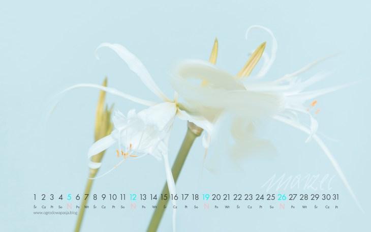 kalendarz na pulpit 2017 marzec