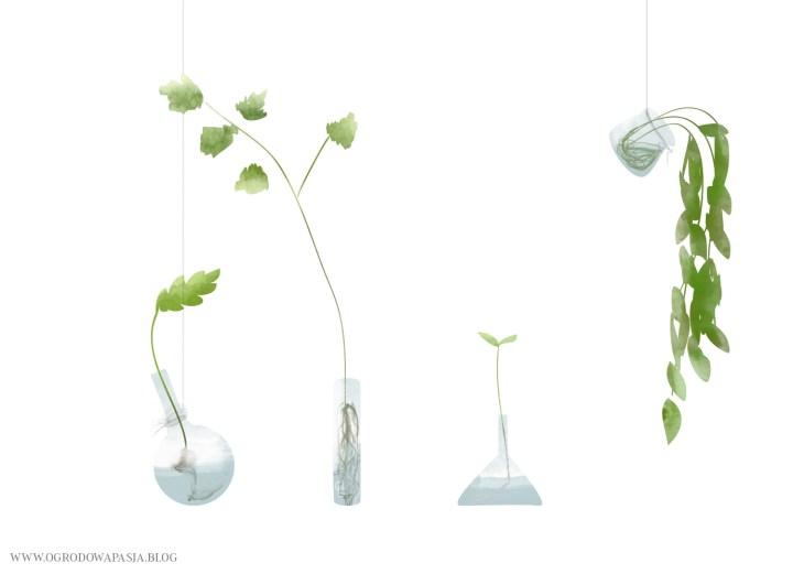 uprawa roślin w wodzie