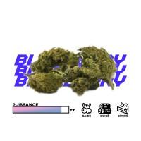 Blueberry Stats