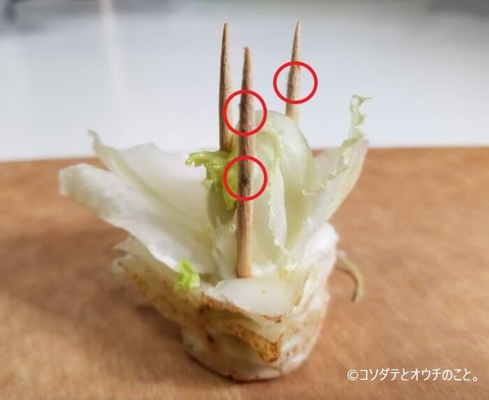 レタスに刺さったつまようじに生えたカビ(1)
