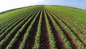 FG Agric Scheme