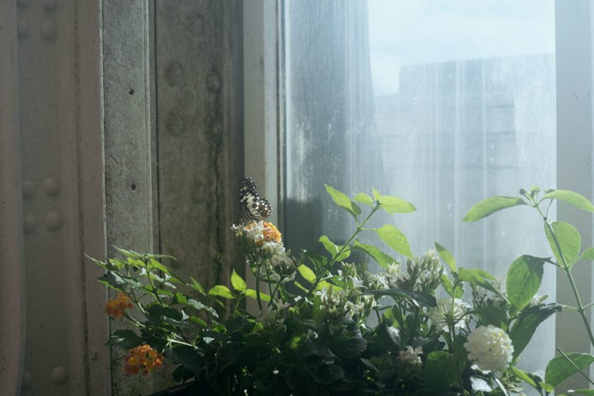 Wien mit Kind. Schmetterlingshaus.
