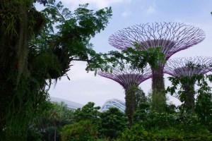 ガーデンズ・バイ・ザ・ベイ@シンガポール