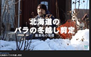 北海道のバラの冬越し剪定:YouTube動画