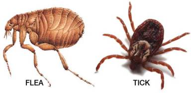 flea-and-tick