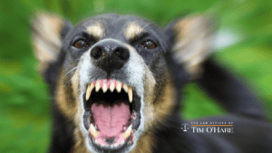 Read more about the article Do You Know the Laws About Dog Bites in Texas?