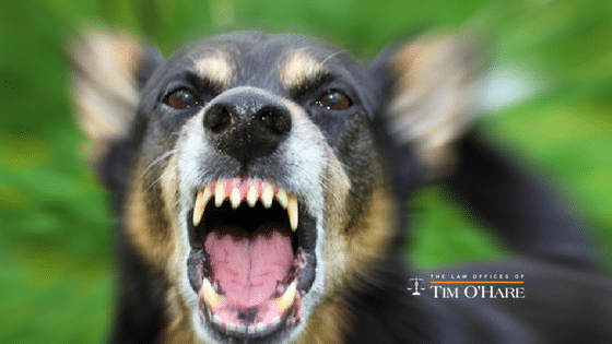 Do You Know the Laws About Dog Bites in Texas?