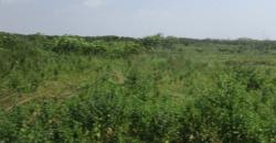 Residential Plot of Land for Sale