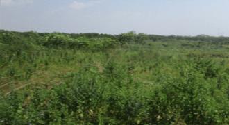 Multipurpose Plot of Land for Sale