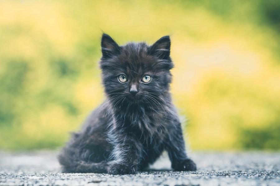 Anak kucing di jalan