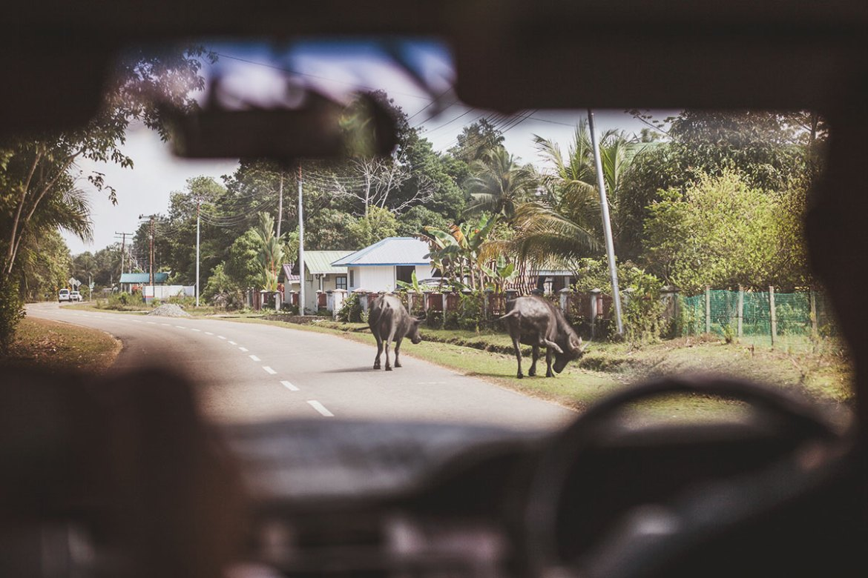 Pulau Tiga / Survivor Island, Sabah, Borneo