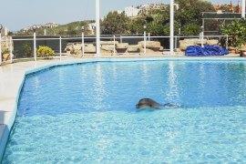 Det var en dröm att få simma med delfiner