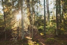 Tivedens Nationalpark - ett skogsäventyr i Västergötland