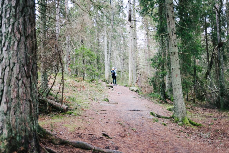 tyresta-nationalpark-stockholm-27