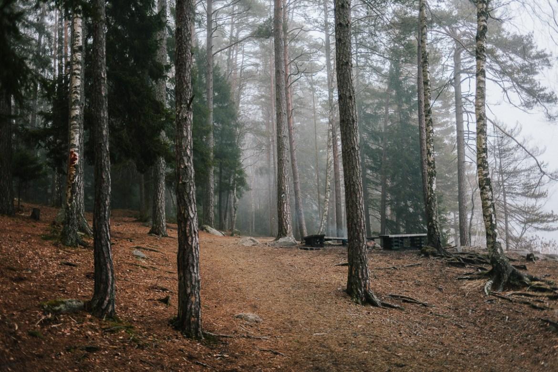tyresta-nationalpark-stockholm-80