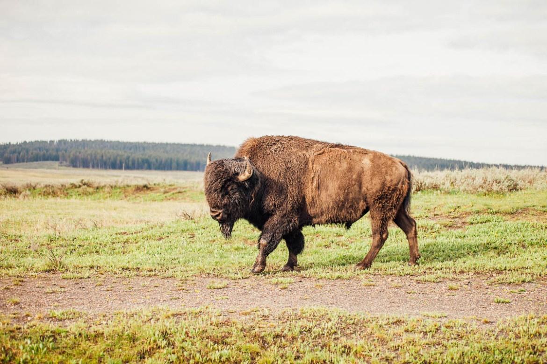yellowstone-nationalpark-27