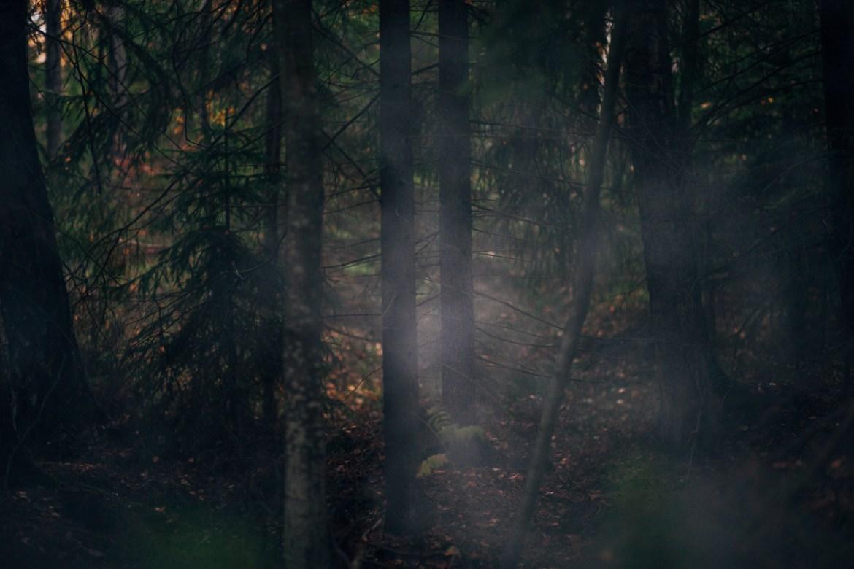 herbie-i-skogen-6