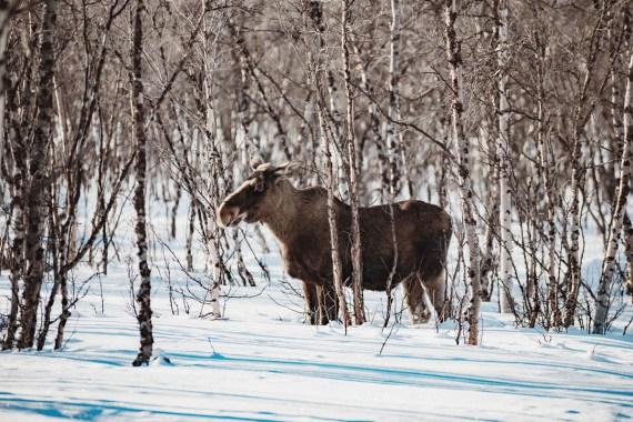 Fem djur- och naturupplevelser i Sverige att drömma om