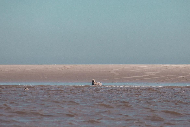 Vadehavet UNESCO världsarv