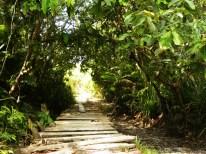 Wanderung durch den Urwald