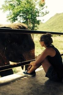 Bekanntmachen mit den Elefanten
