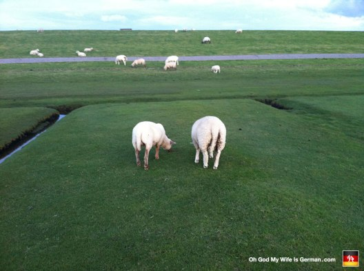 "At the time, I thought this picture was the funniest thing I'd ever seen. Now I just think, ""...dirty sheep butts."""