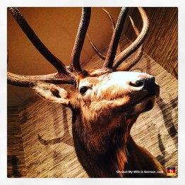 06-taxidermy-hunting-trophy-elk