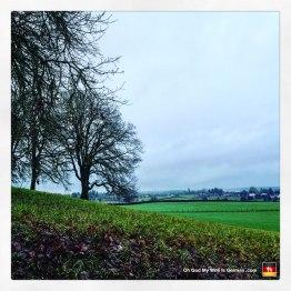 portland-oregon-trees-open-field