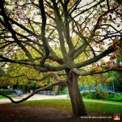 69-vondelpark-amsterdam-fall-leaves