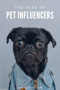 Pet Influencers- The Rise of Influencer Marketing