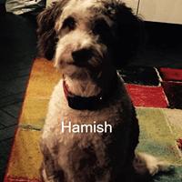 Hamish