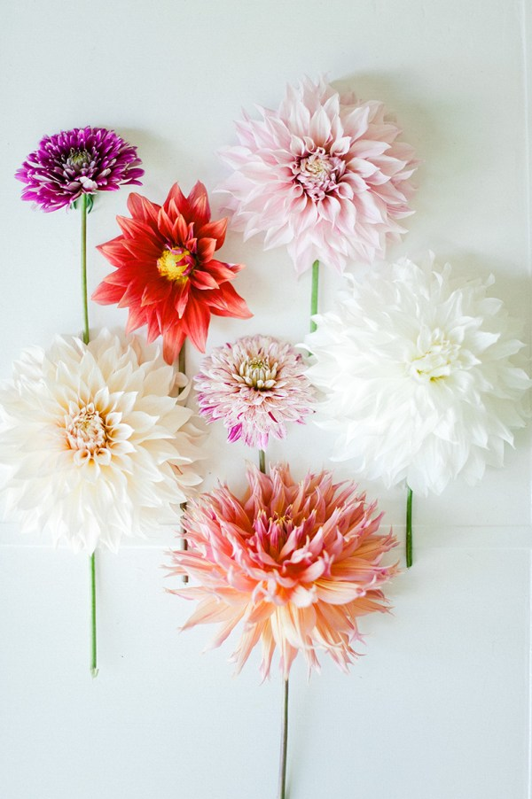 dahlias via oh, i design blog