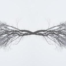 DSC02002-Baumsppiegel