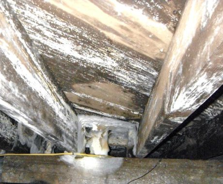 Is Mold In a Crawl Space a Health Problem? Find Out the Truth.