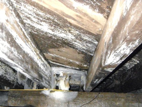 remove mold from a crawl space