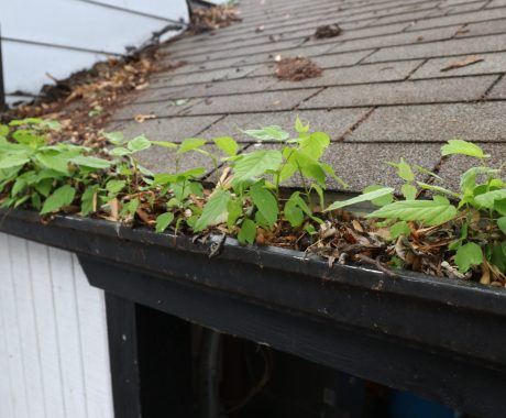 Don't Leave Your Gutters Alone This Fall
