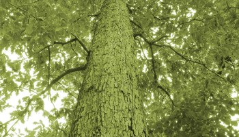 Estimating Standing Timber Value - Timber Works