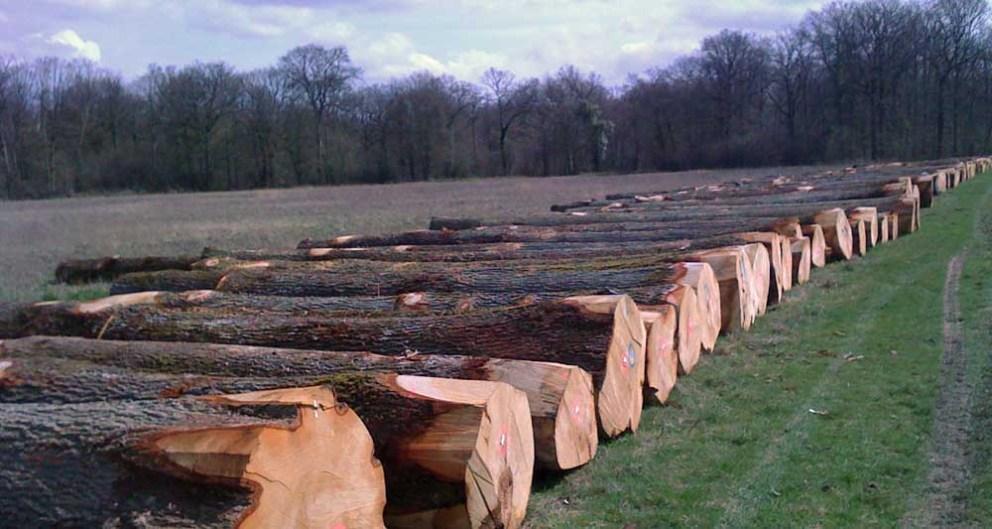 hardwood logs lined up in field